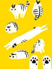和猫在一起生活的日记